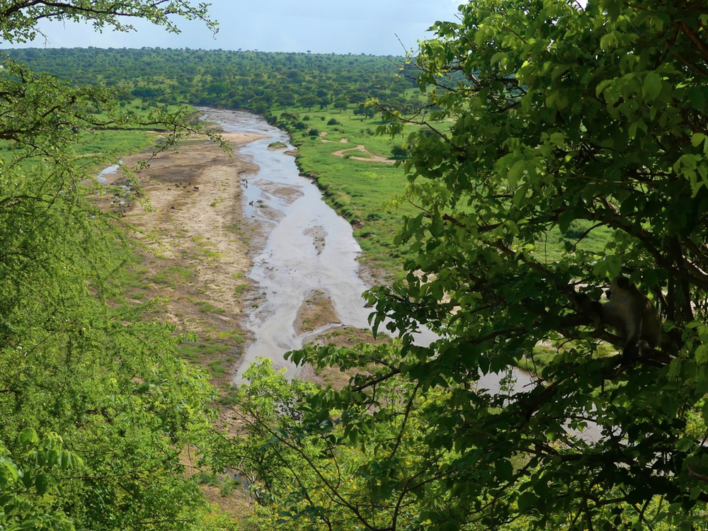 rivière Tarangire Tanzanie