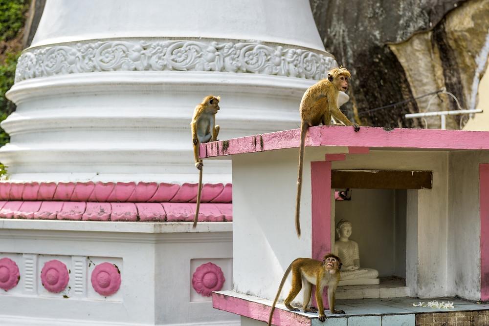monastère tangalle