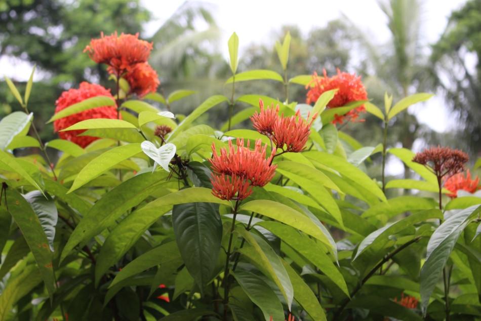 Jardins bangladesh