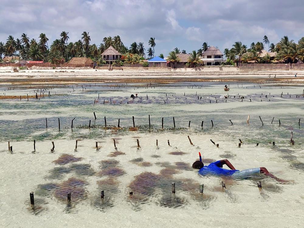enfants algues de Jambiani