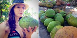 Coco Dominical Costa Rica