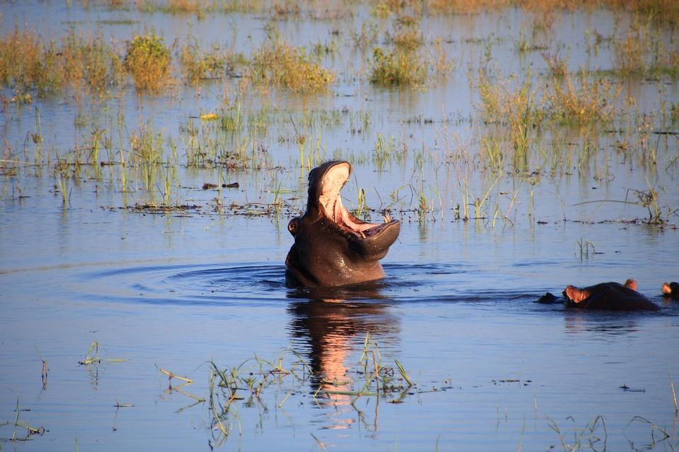 Kasane et la rivière Chobe au Botswana
