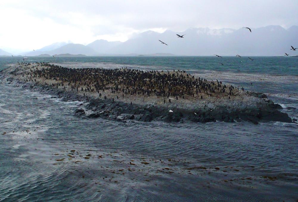 Canal Beagle croisière Ushuaïa