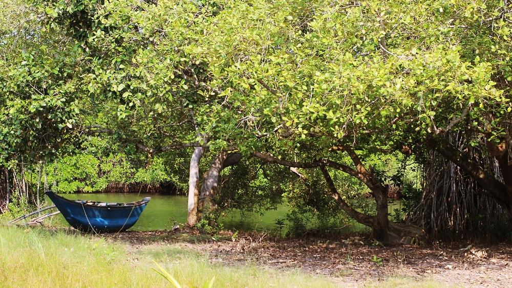 mangrove tangalle