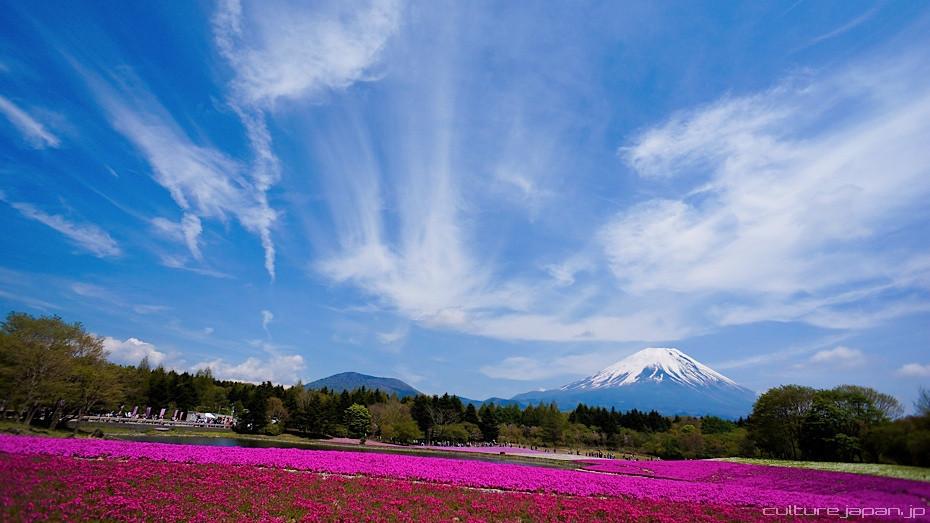 Fuji Moss Pink Festival