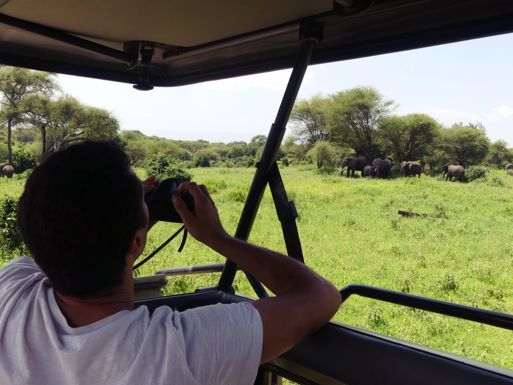 safari au parc de Tarangire