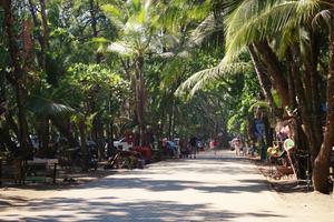 Que faire Dominical au Costa Rica