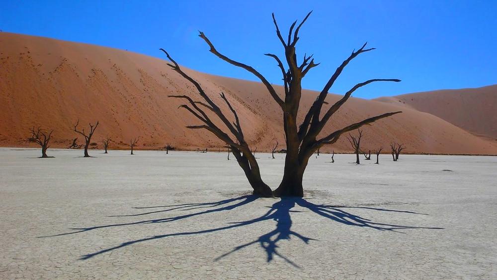 arbre mort Dead Vlei