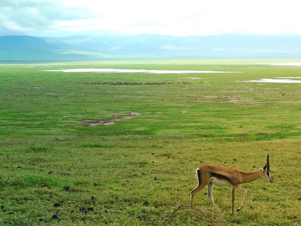 animaux cratère ngorongoro