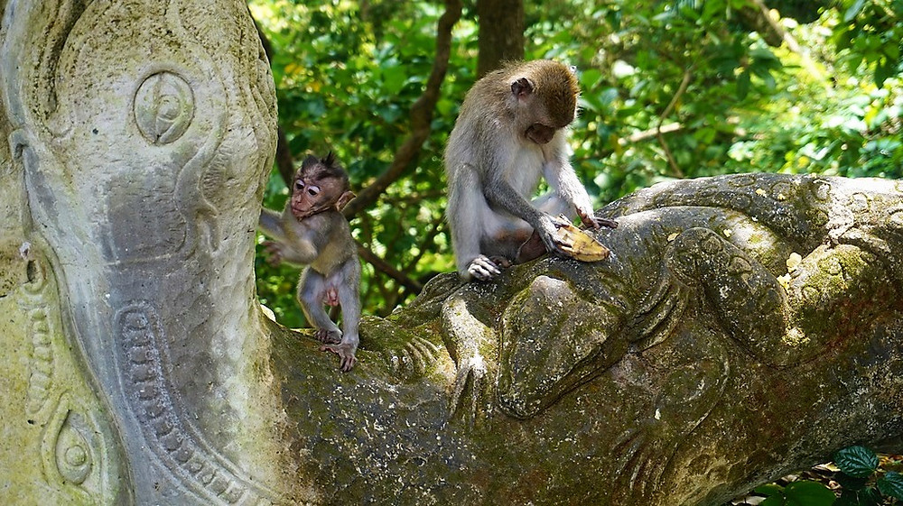 Monkey Forest d'Ubud