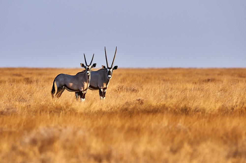gembox etosha namibie