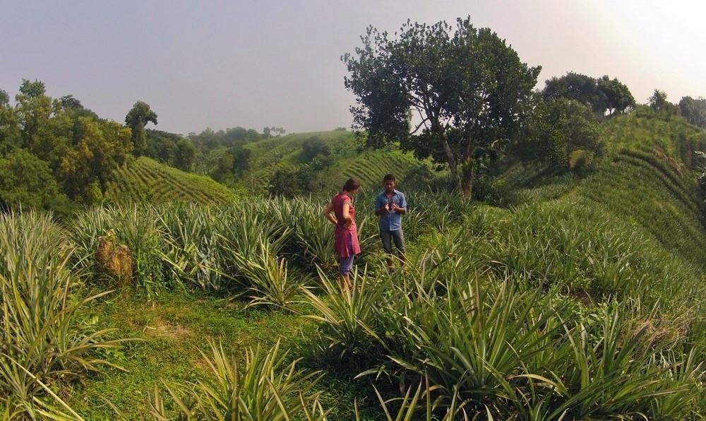 sreemangal plantations bangladesh