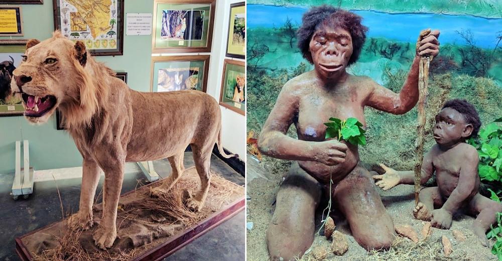 musée histoire naturelle Arusha