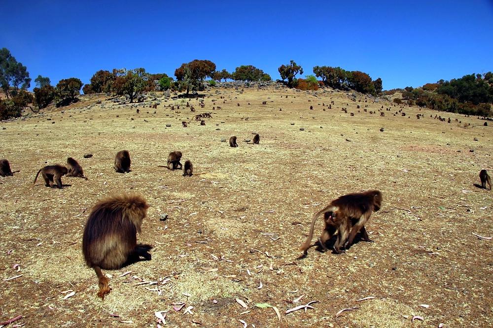 Simien Ethiopie