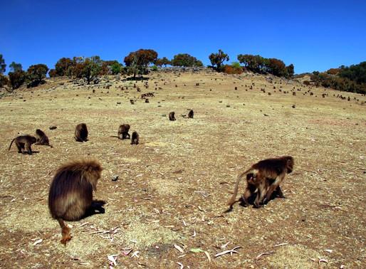 Le Parc national du Simien en Ethiopie
