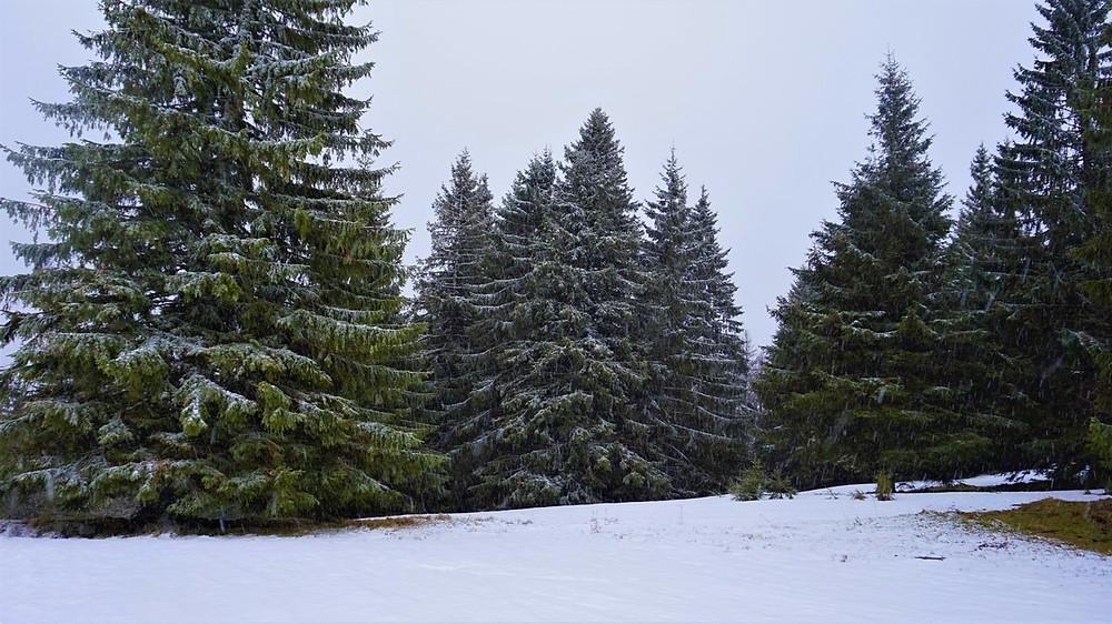 activité chiens neige dans le massif des vosges