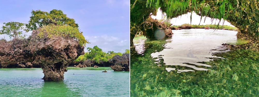 mangrove safari blue