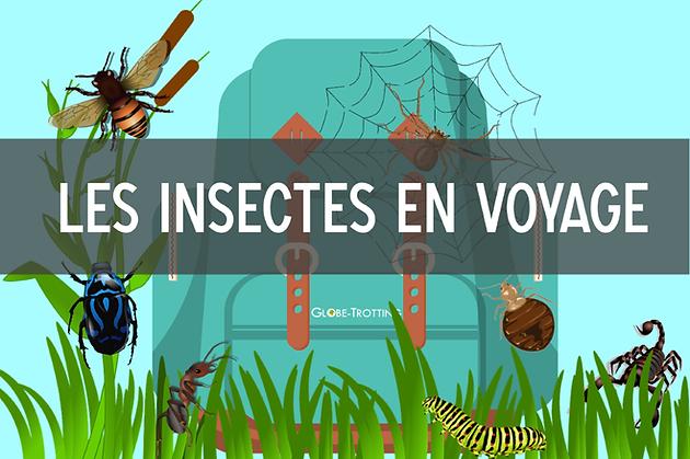 Les Trotting Insectes VoyageGlobe En Blog dCQxBtshr