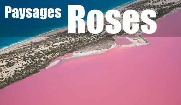 PAYSAGES ROSES