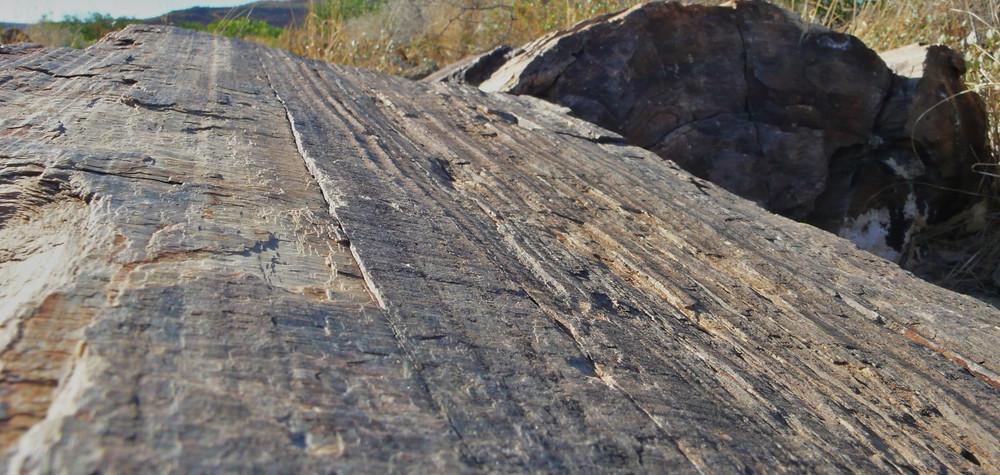 forêt pétrifiée Damaraland