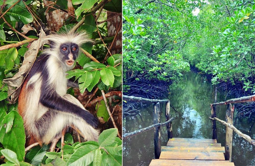 parc de Jozani Chwaka Bay
