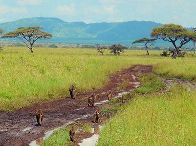 Serengeti safari Voyage Tanzanie