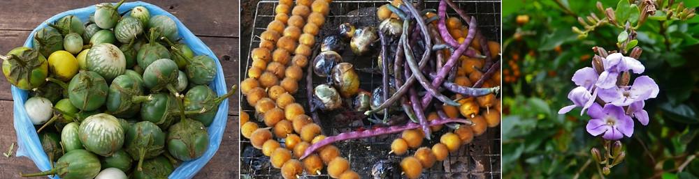 plateau des bolovens fruits