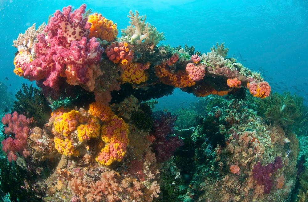 Corail Raja Ampat