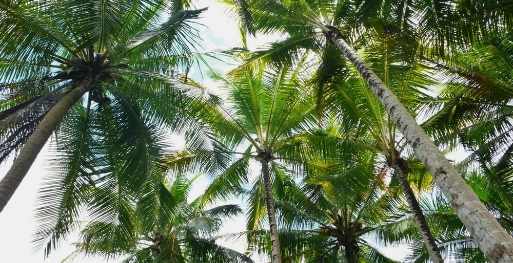 raja ampat palmiers