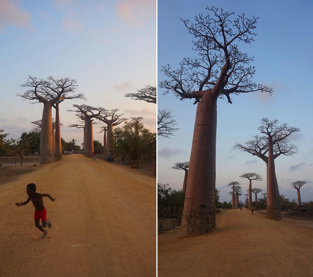 enfant allée des baobabs Madagascar