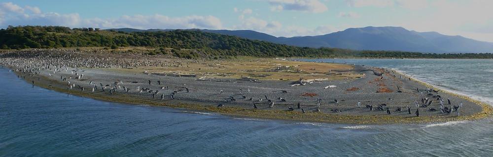 pinguinera Ushuaïa Canal Beagle