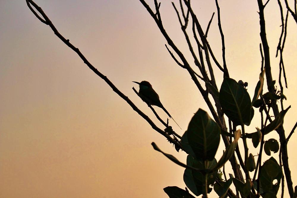 oiseaux uda walawe