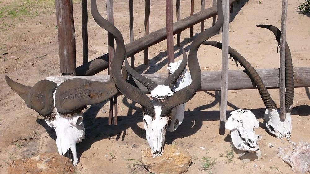 Road trip namibie botswana afrique du sud