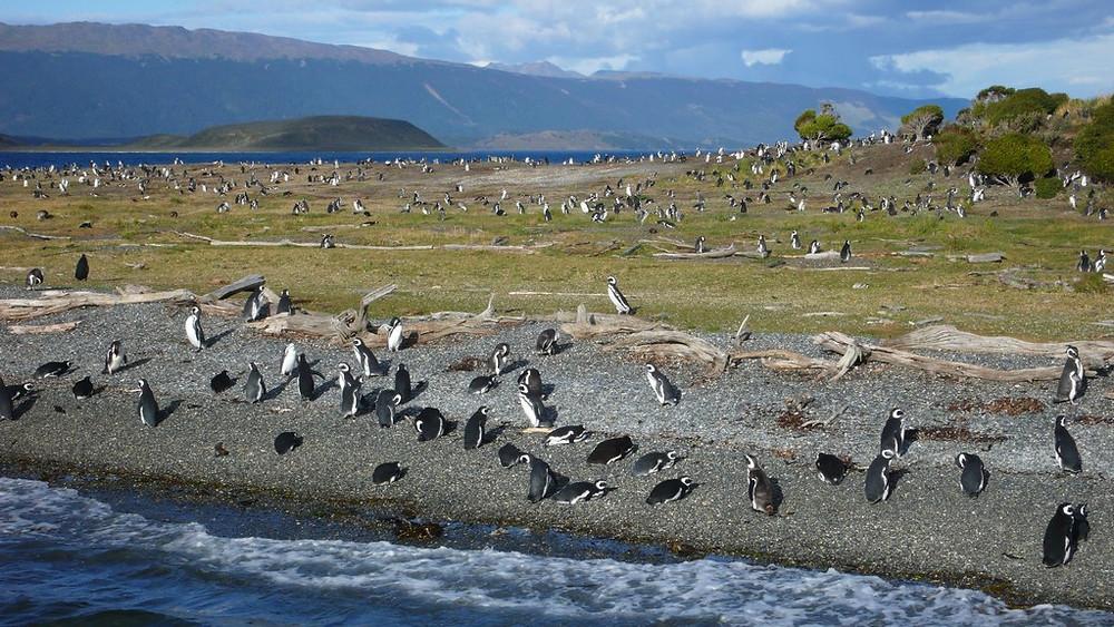 Croisière pinguinera Ushuaïa