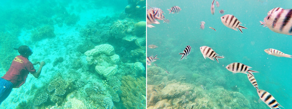 snorkeling stone town