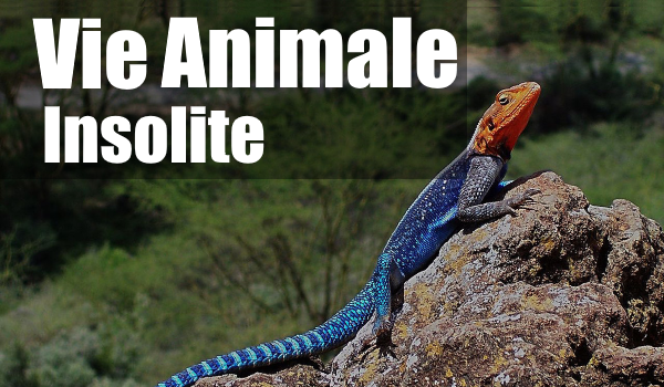 VIE ANIMALE INSOLITE