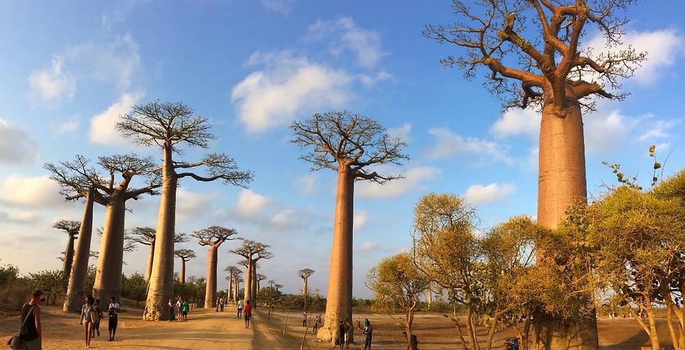 touristes allée des baobabs Madagascar