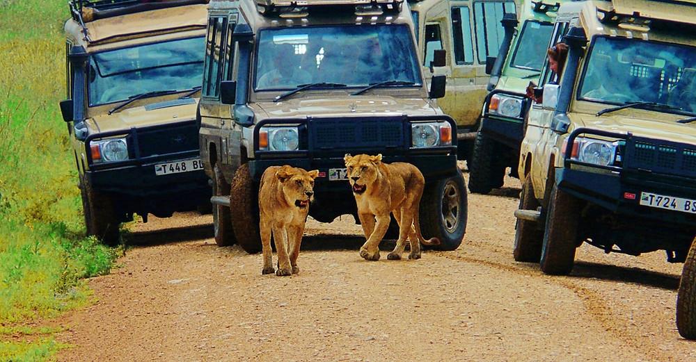 Lion route Serengeti