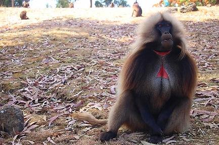 Voyag Ethiopie simien.jpg