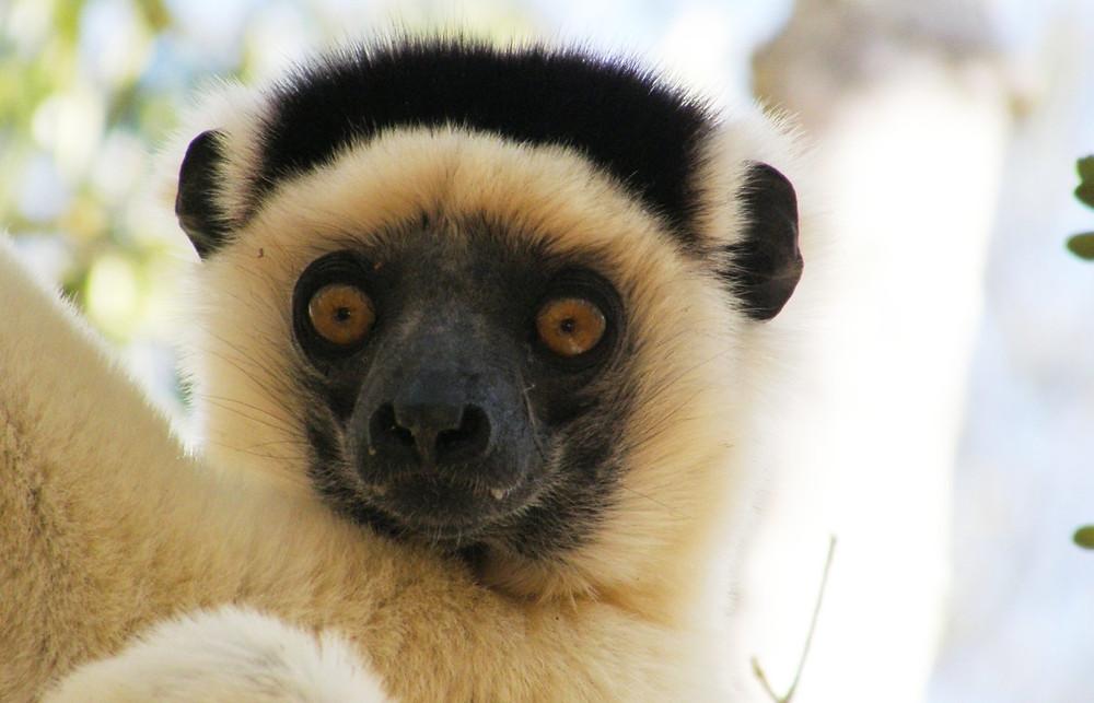 Kirindy à Madagascar