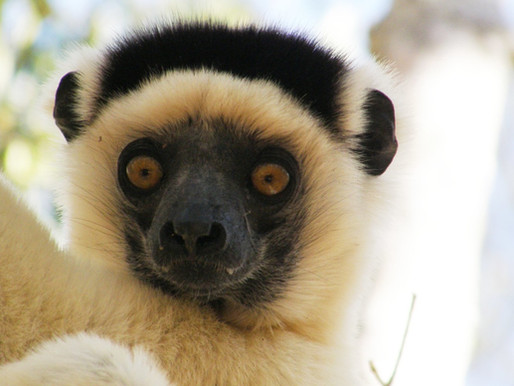 Forêt Kirindy à Madagascar