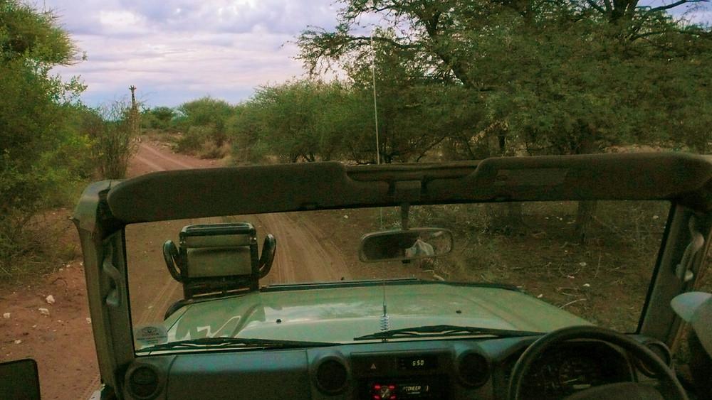 safari Ghanzi Motswiri road trip botswana