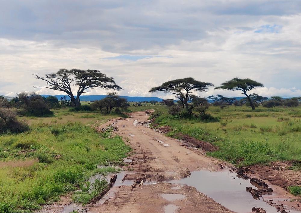 Parc du Serengeti savane
