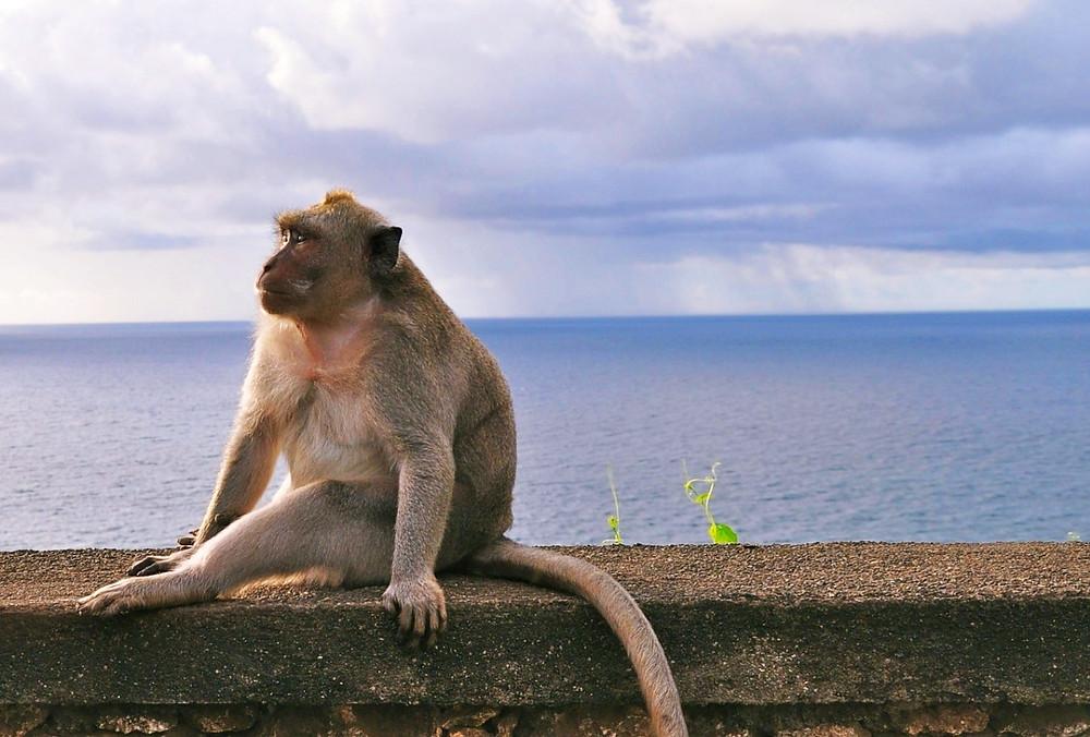 Bukit Bali singe Uluwatu