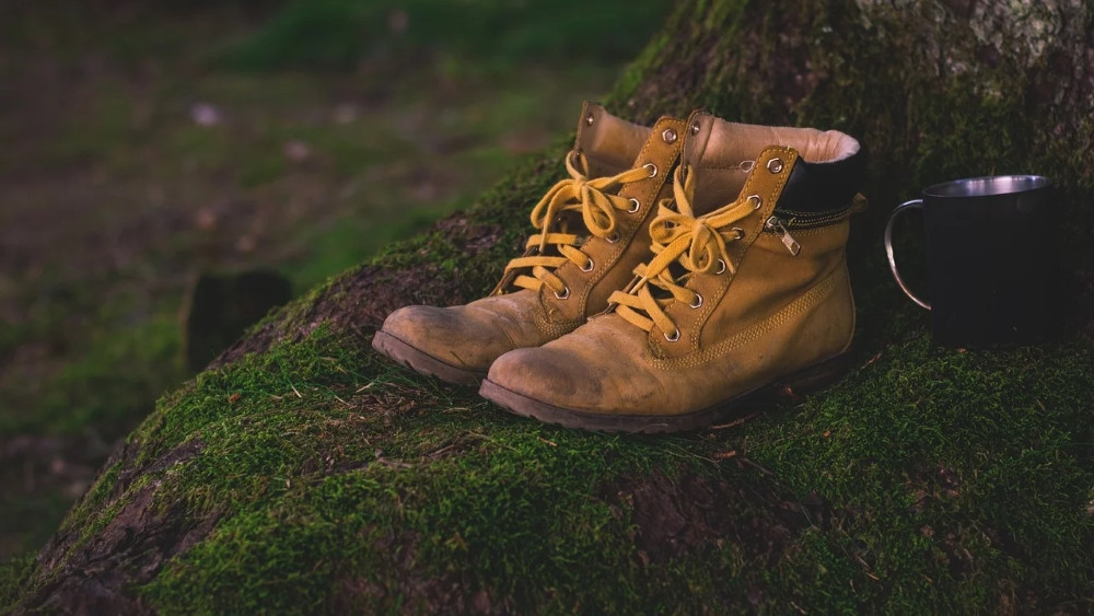 Livre coment chier dans les bois critique