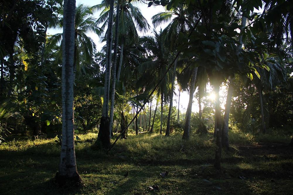 meilleur hôtel à Anuradhapura
