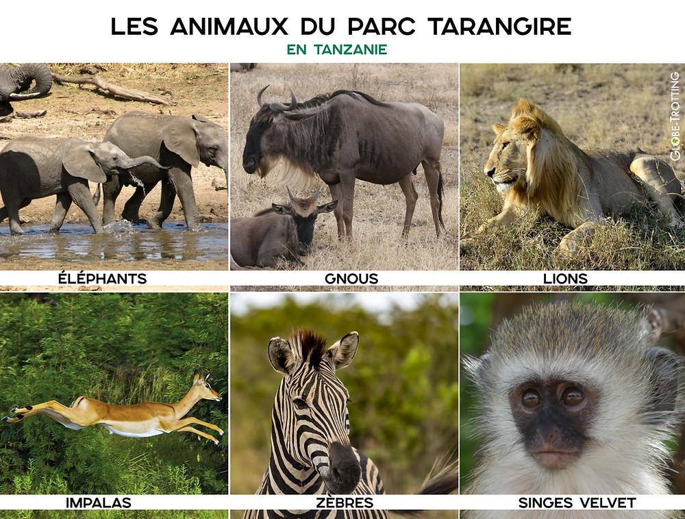 Animaux parc tarangire Tanzanie