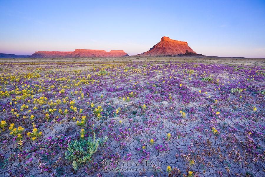 Colorado en fleurs