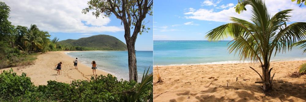 Anse Tillet plus belle plage de Deshaies Guadeloupe