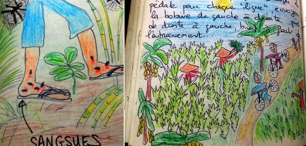 dessins sangsues sreemangal bangladesh